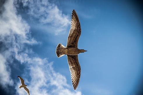 sea-gull-765490_1920.jpg