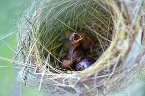 bird-nest-1285369_1920.jpg