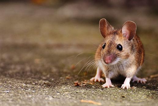 mouse-1708367_1920.jpg