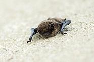 bat-3380678_1920.jpg