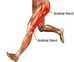 Iliotibial Band Syndrome .... Don't Foam Roll it!