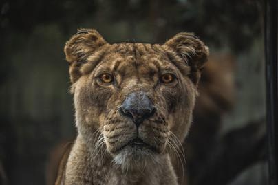 Zit er een leolux leeuw in iedereen?