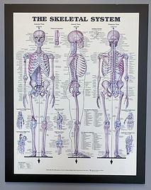 skeleton_edited.jpg