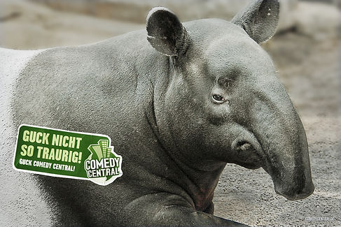 gnst_tapir_AZ_FINAL.jpg