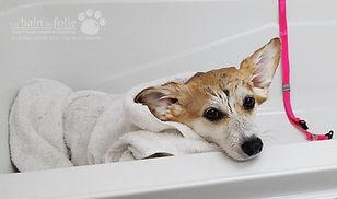 Soins de la peau pour chiens