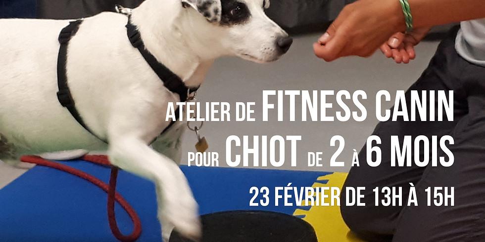 Fitness pour chiot (2 à 6 mois) - découverte et exploration !