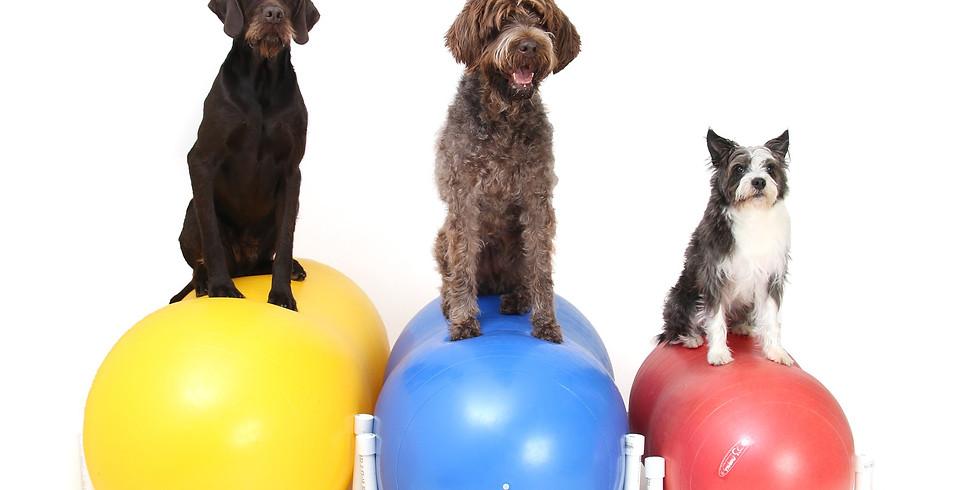 Introduction au Fitness canin - s'amuser pour être en santé!