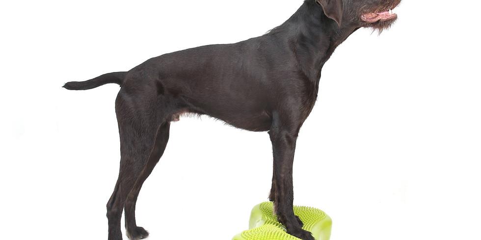 Fitness canin niveau 2 - Favoriser la santé du chien par l'activité