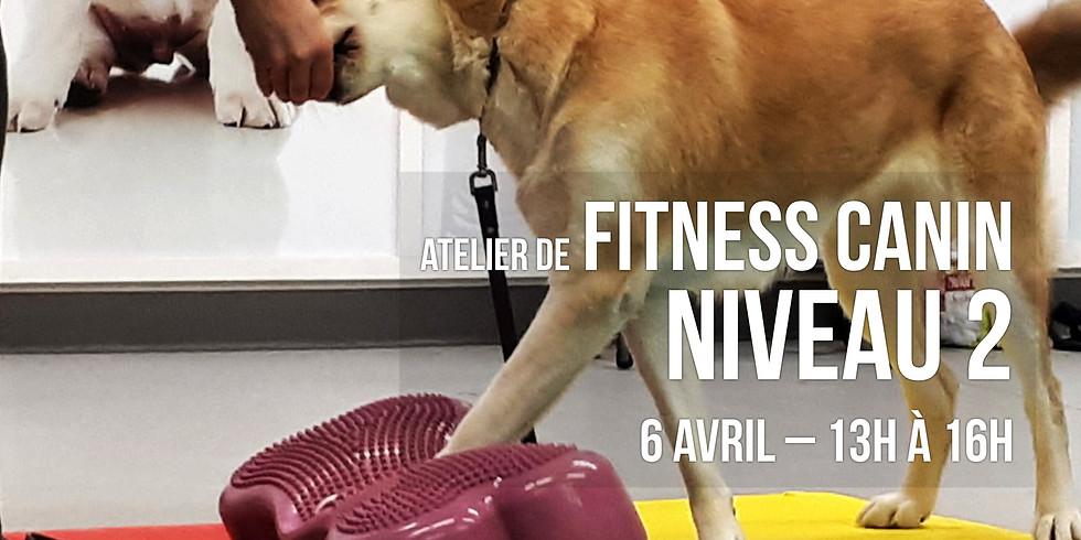 Fitness canin Niveau 2 - favoriser la santé par l'activité