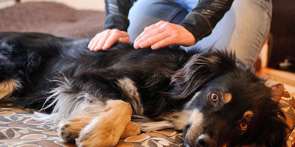 Cours d'Initiation au massage canin