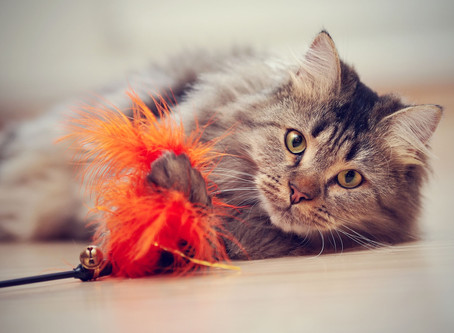 Votre chat vous parle : 3 signaux faciles que tout propriétaire devrait connaître !