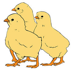 Chicks_clipart_01.svg.png