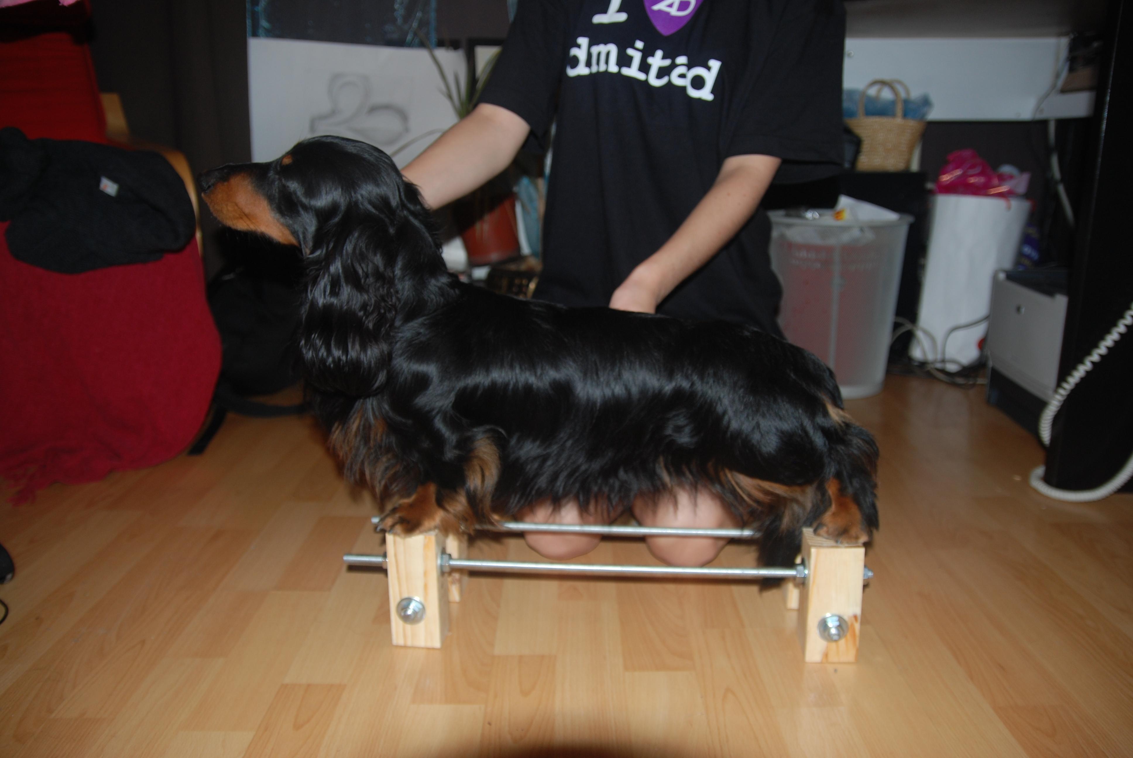 Тренажер для собак