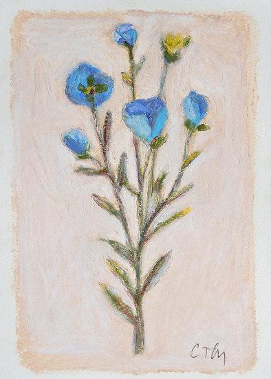 Blossom No.I   [5x7]