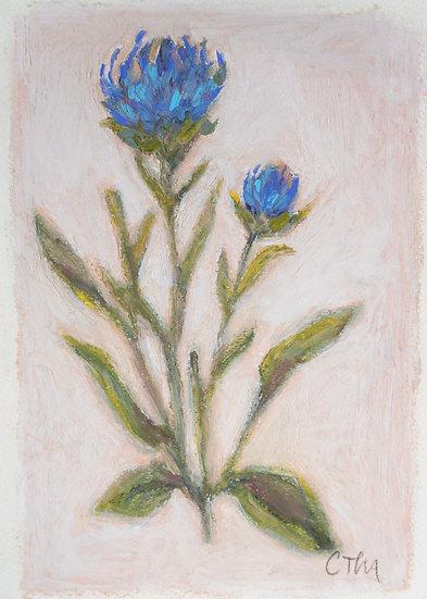 Blossom No.II   [5x7]
