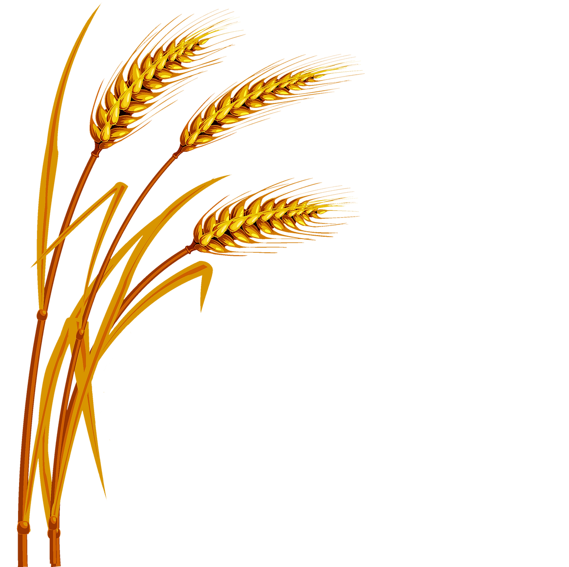wheat_PNG54_edited.png