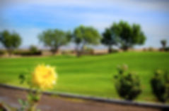 banner_Agave-Yellow-Rose_web-1024x678.jp