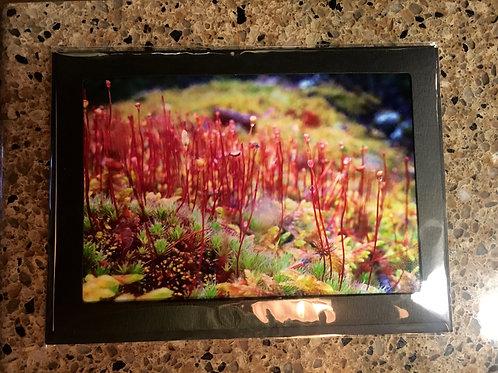 Fairy World 5x7 photo card