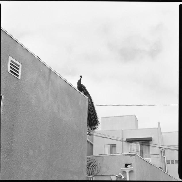 Los Angeles, CA (Echo Park)