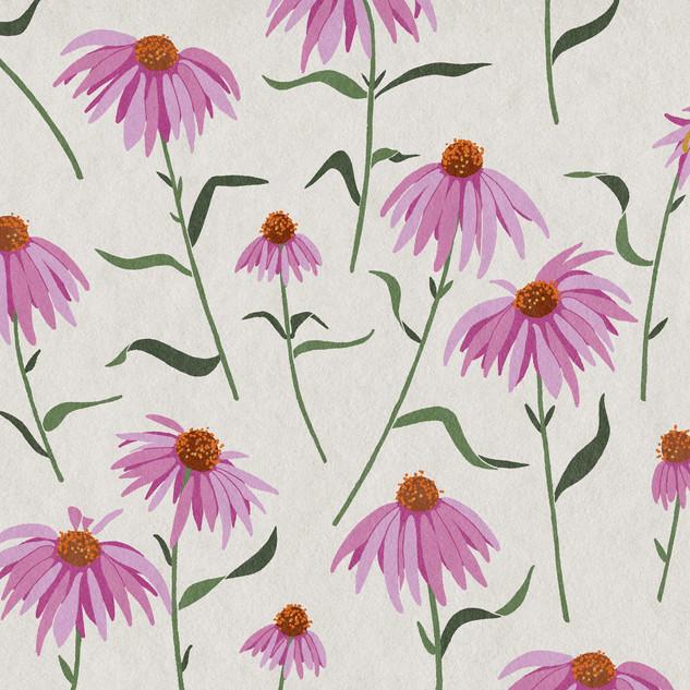 Echinacea.jpg