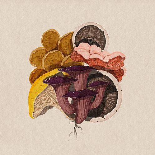 Fungi No. 2