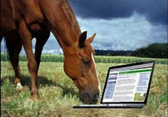 Growing Your Equestrian Business Using Social Media & Blogging