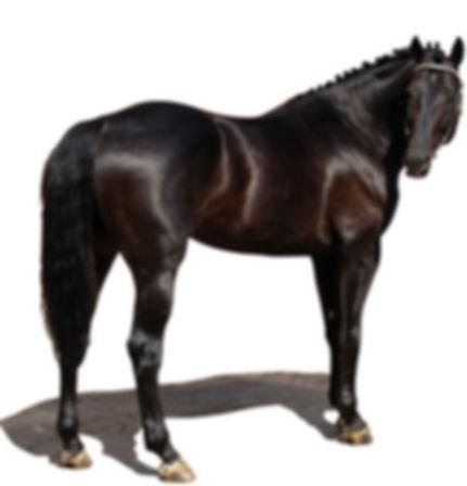 marketing my horse