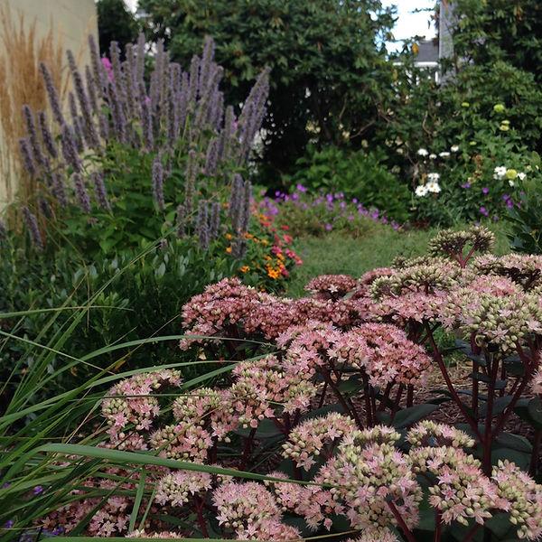 newport garden design, groundSwell Designs