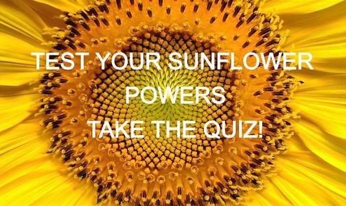 sunflower-flowers-helianthus-sun-preview