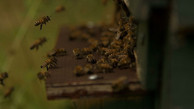 Beekeepers in Glostrup