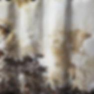 mycelium close up.jpg