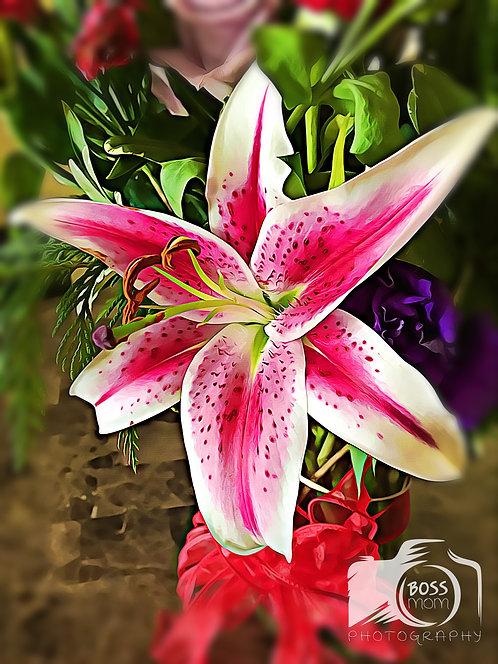 Star Gazer Pink