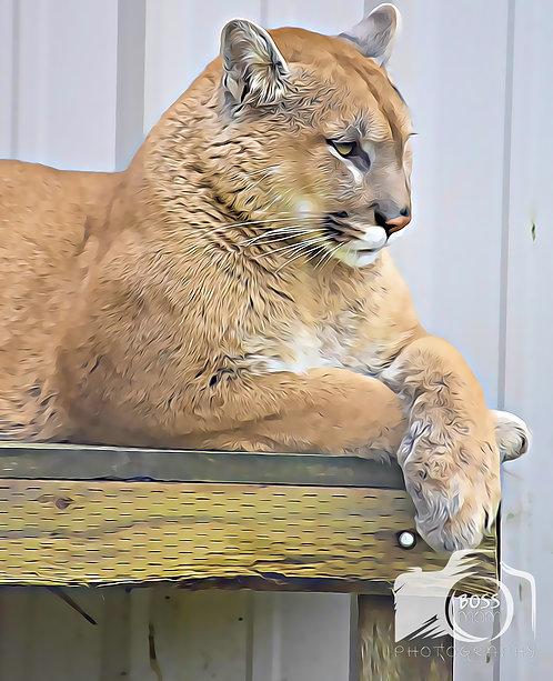 Cougar / Puma Artsy