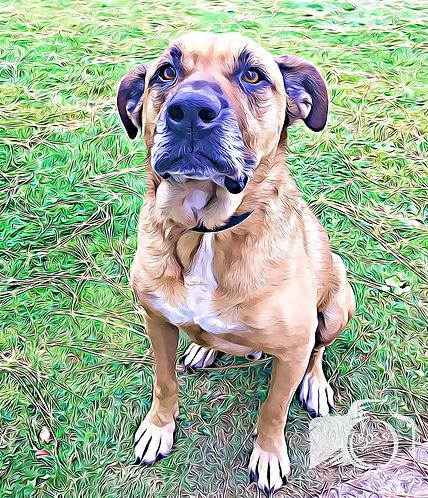 Rex - Boss Dogs Cousin