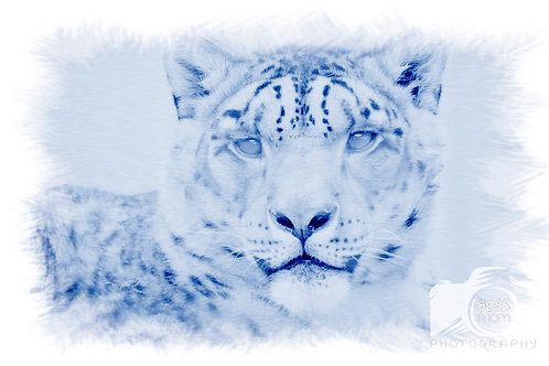 Snow Leopard Artsy