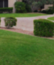 Turf Fertilization, Grass Fertilization, liquid fertilizer, fertilization programs, spray services