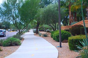 Olives, Olive Tree Fruit Control, Olive Tree Fruit Stop, Olive Stop, Phoenix Olive Tree Spraying