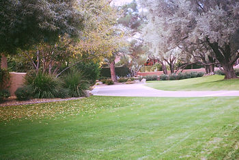 HOA Weed control, Phoenix weed control, commercial weed control, homeowners association weed control, weed services.