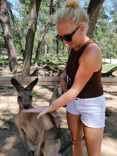 Kangaroo Feeding
