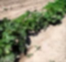 Organic produce, organic vegetables
