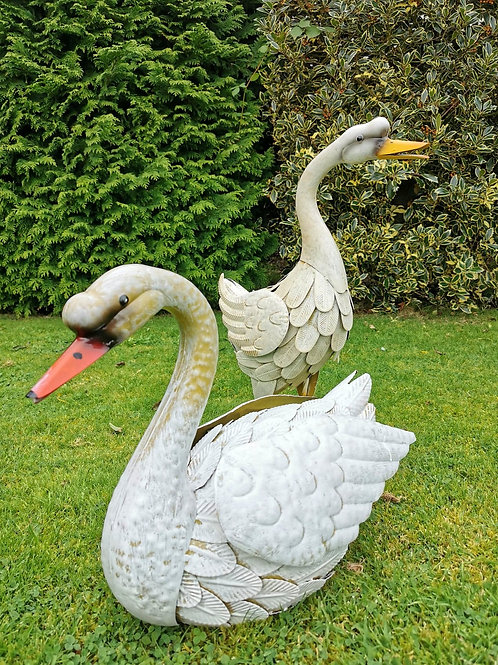 Stuart & Samantha the Swans
