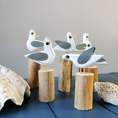 Group of Gulls on Groynes