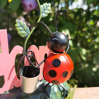 Lola the Ladybird Welcome