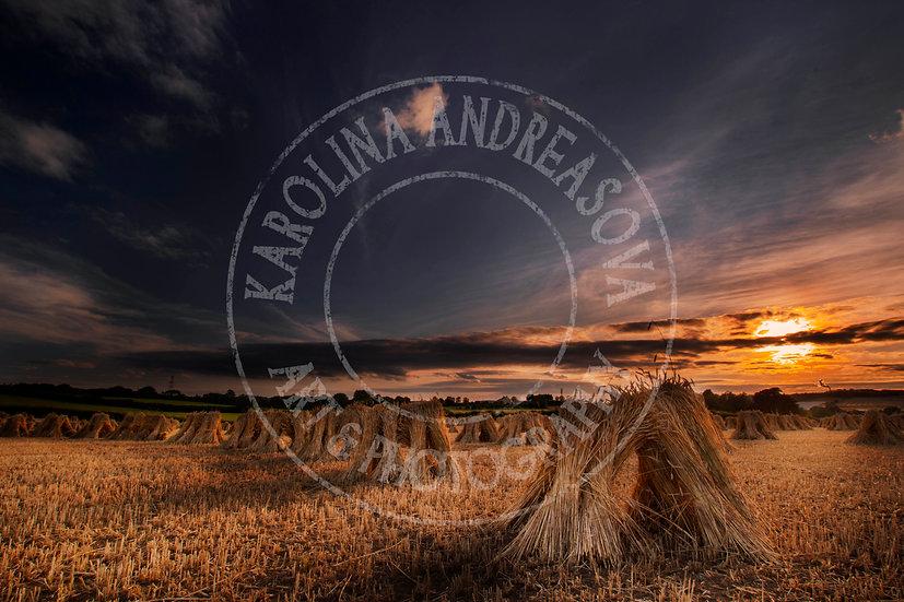 Stooks at sunset in Devon, UK