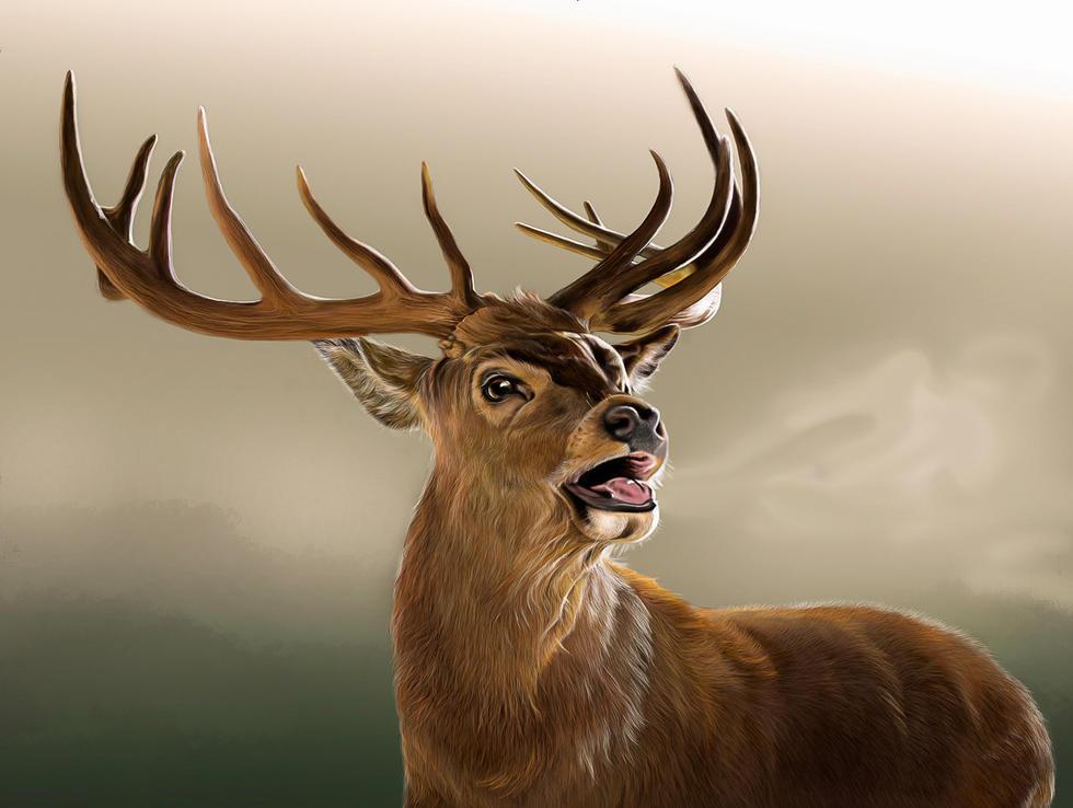 stag remake original background 1.jpg