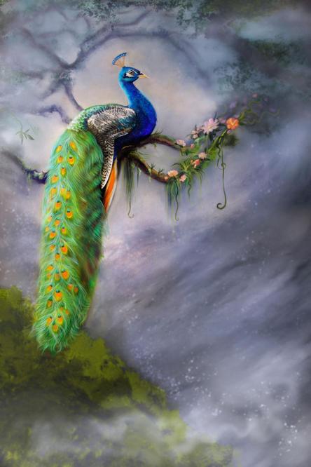 peacock final image.jpg