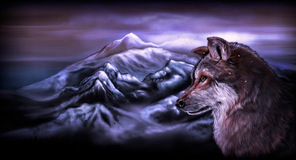 wolverine in my mountains.jpg