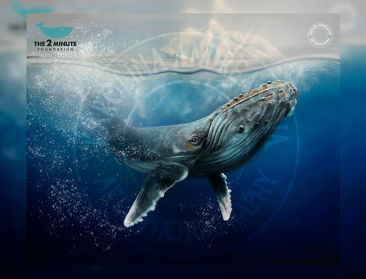 Whale Artwork - limited edition of prints