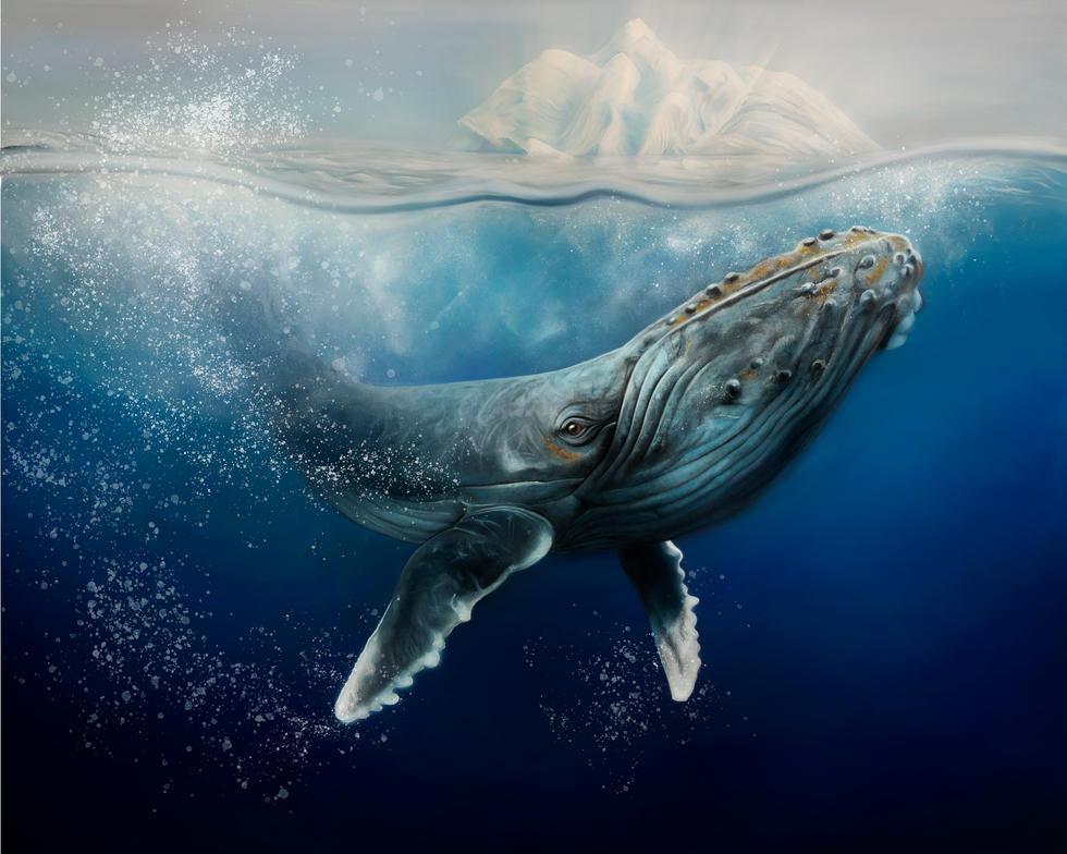 humpbag whale re edit - bubbles.jpg