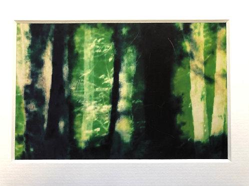 Justine Miller, Woodland II, 20.5cm x 15.5cm mounted, print